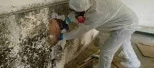 Mold Cleanup Atlanta
