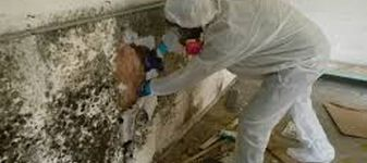 Mold Cleanup Atlanta