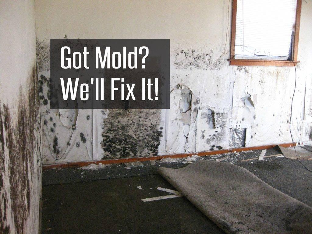 Mold Removal Service Atlanta