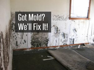 mold remediation atlanta